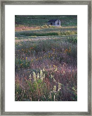 Framed Print featuring the photograph Lupine by Laurie Stewart