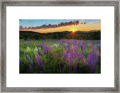 Framed Print featuring the photograph Lupine Lumination by Bill Wakeley