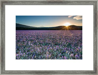 Lupine Meadow Framed Print by Leland D Howard