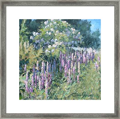 Lupine On Parade Framed Print by L Diane Johnson