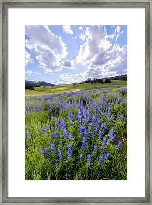 Lupine Pass Framed Print by Chad Dutson