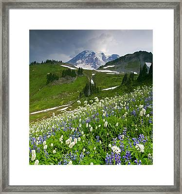 Lupine Storm Framed Print by Mike  Dawson