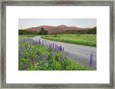 Lupine Sunset Road Framed Print
