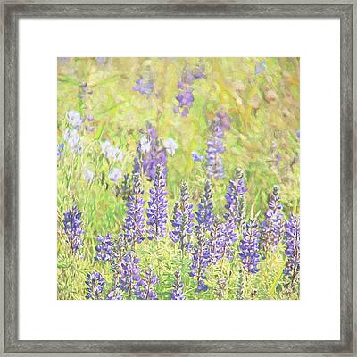 Framed Print featuring the photograph Lupine Wildflowers Montana by Jennie Marie Schell