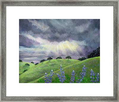 Lupines After A Spring Storm Framed Print by Laura Iverson