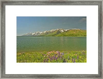 Lupines In The Tetons Framed Print