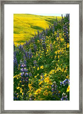 Lupins And Daisys Framed Print