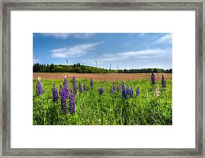 Lupins In A Field Framed Print by Matt Dobson