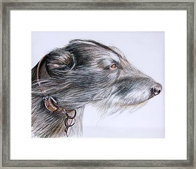 Lurcher Framed Print by Mary Mayes