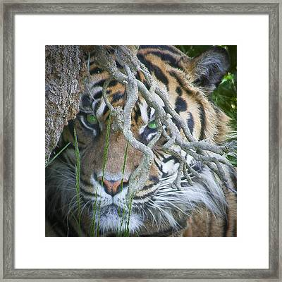 Lurking Framed Print by David Patterson
