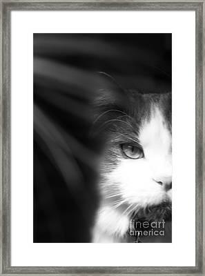 Lurking In The Shadows - Black And White Framed Print by Scott D Van Osdol