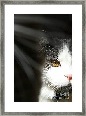 Lurking In The Shadows  Framed Print by Scott D Van Osdol