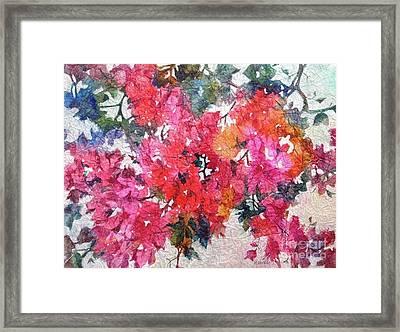 Luscious Bougainvillea Framed Print