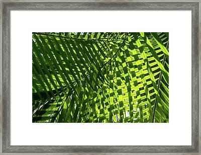 Luscious Geometric Greenery - Sun And Shade Palm Fronds Left Framed Print by Georgia Mizuleva