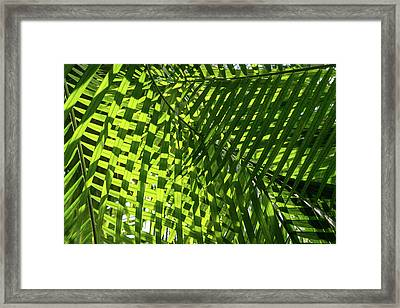 Luscious Geometric Greenery - Sun And Shade Palm Fronds Right Framed Print by Georgia Mizuleva