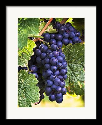 Grape Photographs Framed Prints