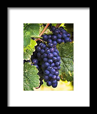 Wine Making Art | Fine Art America