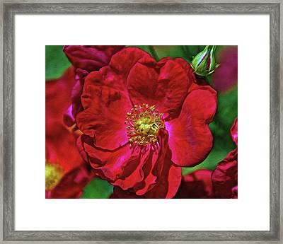 Luscious Red With Effects Framed Print