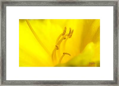 Luscious Yellow Framed Print
