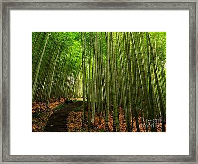 Lush Bamboo Forest Framed Print by Yali Shi