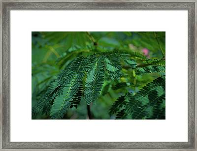 Lush Foliage Framed Print by Stefanie Silva