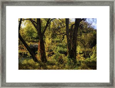 Lush Garden Framed Print by Garry Gay