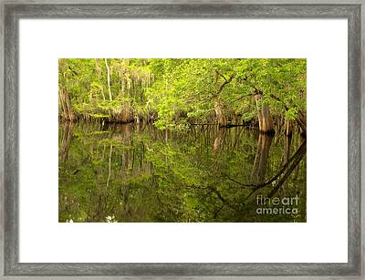 Lush Green Reflections At Manatee Springs Framed Print by Adam Jewell