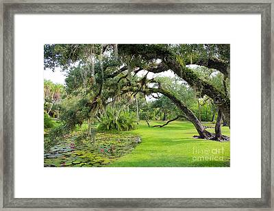 Lush Oak Arches Framed Print by Liesl Walsh