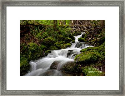 Lush Stream Framed Print by Mike Reid