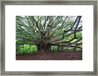 Lush Tropical Banyan Tree Framed Print