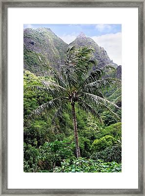 Lush Tropical Coconut Palm Tree At Iao Valley Maui Hawaii Framed Print