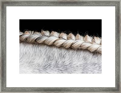 Lusitano Horse, Bahia, Brazil Framed Print by Mint Images/ Art Wolfe