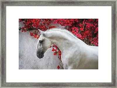 Lusitano Portrait In Red Flowers Framed Print