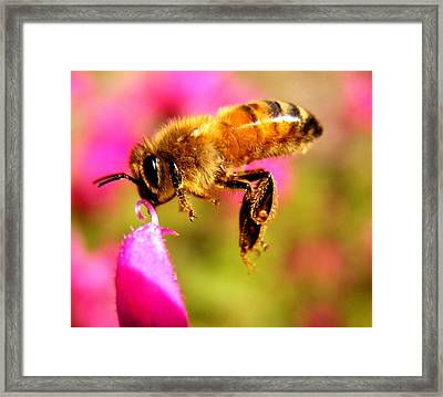 Luv Beeing Kissed Framed Print by Trudi Simmonds