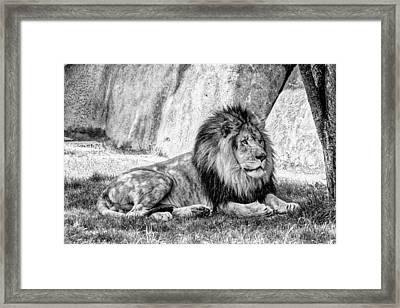 Lyin' In The Shade Framed Print by Jon Woodhams