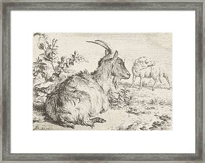 Lying Goat Framed Print