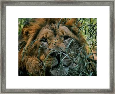 Lying In Wait Framed Print