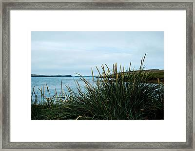Framed Print featuring the photograph Lyme Grass by Marilynne Bull