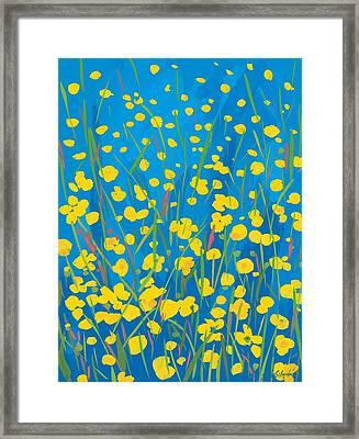Lympstone Buttercups Framed Print by Sarah Gillard