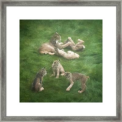 Lynx In The Mist Framed Print