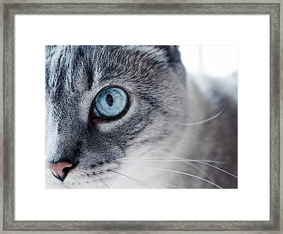 Lynx Point Kitty Framed Print by Rachel Morrison
