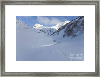 Lynx Tracks In A Mountain Pass Framed Print by Tim Grams