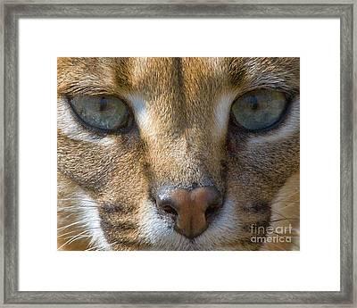 Lynx  Framed Print by White Stork Gallery