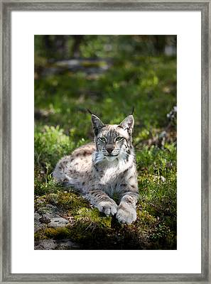 Framed Print featuring the photograph Lynx by Yngve Alexandersson