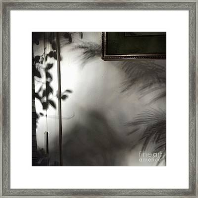 Lysiloma Shadows Framed Print