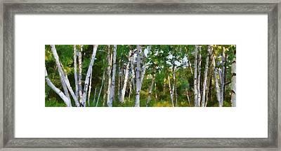M-22 Birches Framed Print