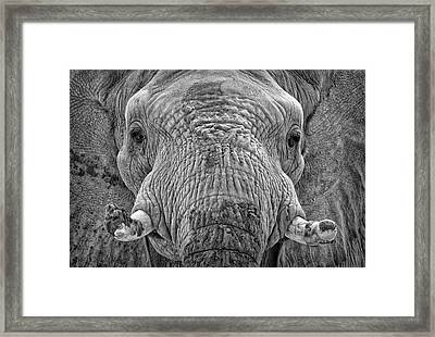 Mabu Up Close N Personal Framed Print