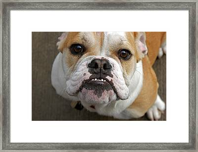 Mac Framed Print by Off The Beaten Path Photography - Andrew Alexander