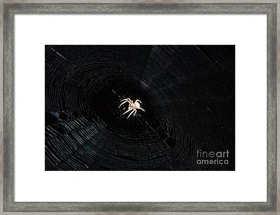 Weaver The Second Framed Print