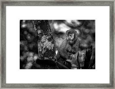 Macaco Prego II Framed Print